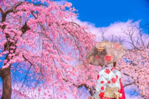 TravelFitter Korea Kultur Kirschblüten